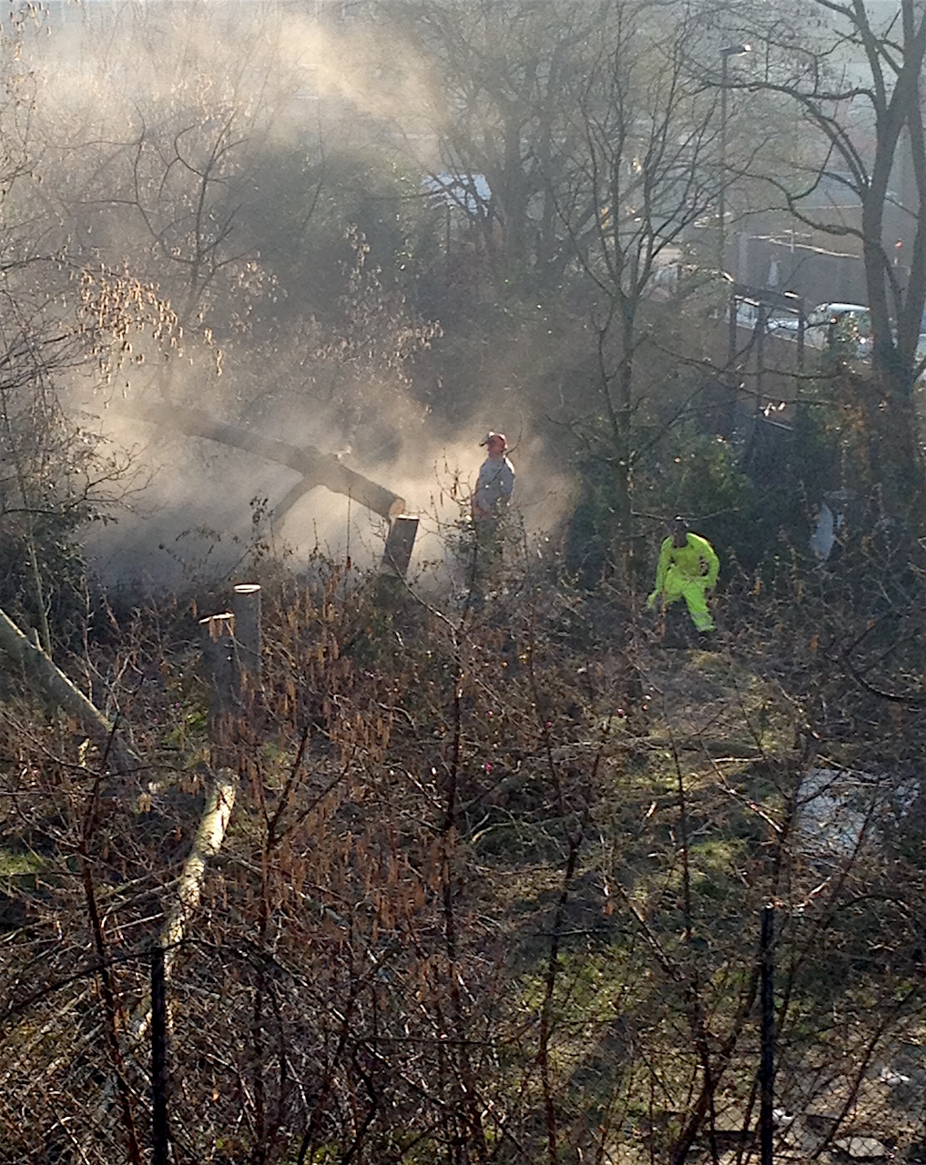 The destruction of the Old Tidemill Wildlife Garden on February 27, 2019 (photo by David Aylward).